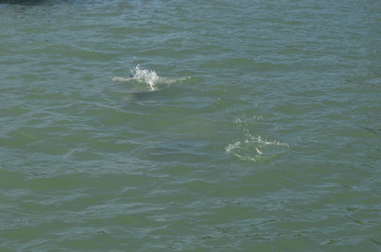 Dolphins (3)