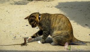 cat 23rd-1