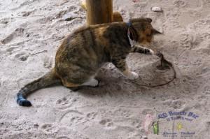 cat 23rd-2