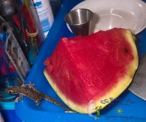 8th watermelon thief-1