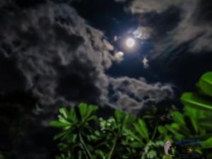 21st moon-15