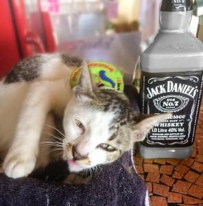 28th Kitty