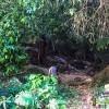 water fall Khuan 9'9'7' N 99' 44' 33' E-2