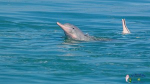 Dolphins 20th April 2017-56