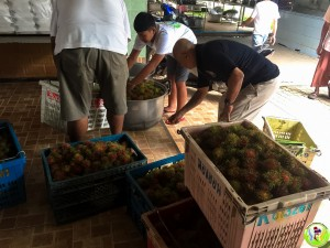 Donation fruit 100Kg-2