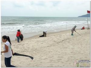 Beach Cleaning 3rd nov  (5)
