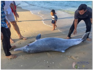 Dead Dolphin 23rd March 2019-5