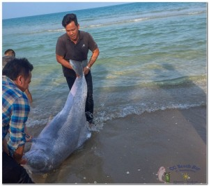 Dead Dolphin 23rd March 2019-6
