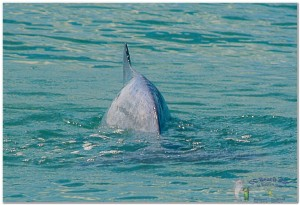 Dolphins (4)