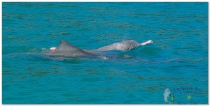Dolphins (5)